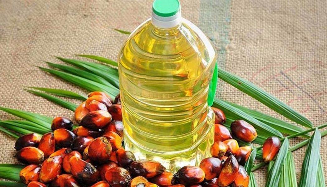 El mercado exige a la palma aceitera encauzar su producción